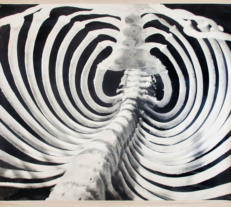 ANDREAS FEININGER (1906-1999): GORILLA RIB CAGE