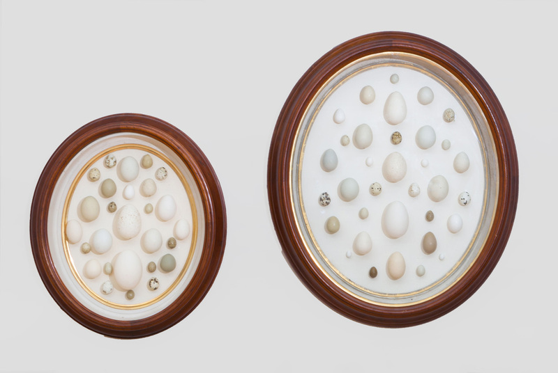 TWO VICTORIAN WALNUT AND PARCEL-GILT GRADUATED-OVAL SHADOW BOX FRAMES, ENCLOSING AN EGG COLLECTION