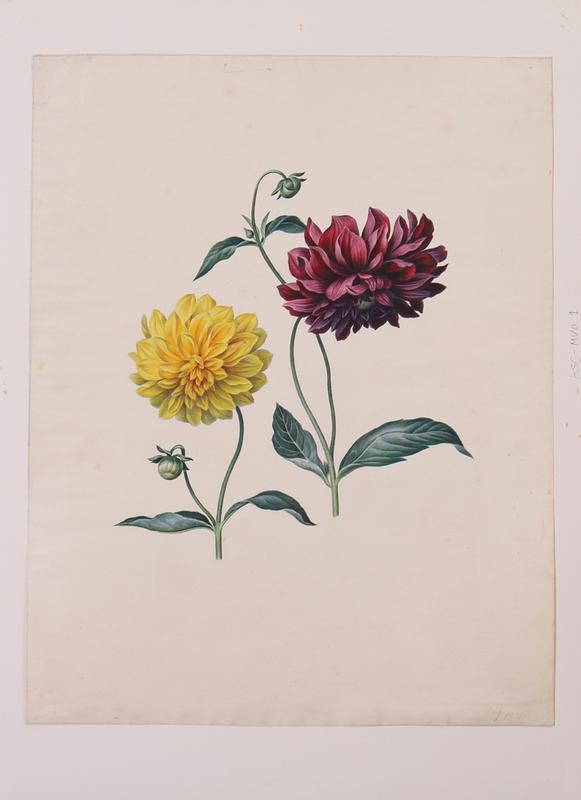 MARIA MARGRITA VAN OS (1779-1862): DAHLIAS