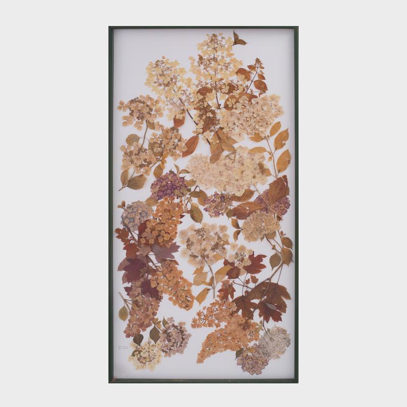 William Stuart Thornton (b. 1946): Hydrangeaceae, Hilia