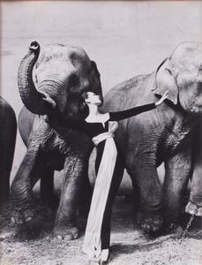 RICHARD AVEDON (1923-2004): DOVIMA WITH ELEPHANTS, (SMALL FORMAT)