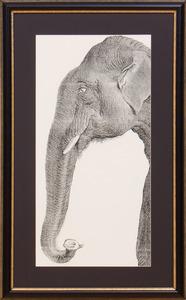 20TH CENTURY SCHOOL: ELEPHANT