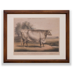 After William Henry Davis (1786/95-1865): Earl Spencer's Prize Durham Ox, from Fore's Portraits of Prize Cattle