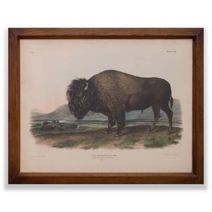 John James Audubon (1785-1851): American Bison