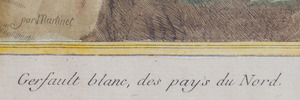 AFTER FRANÇOIS NICOLAS MARTINET (1731-1800): GERFAULT BLANC, AND LE KAKATOES, FROM HISTOIRE NATURELLE DES OISEAUX