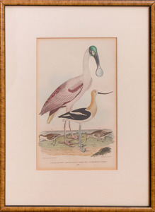 AFTER ALEXANDER WILSON (1766-1813): SPOONBILL, FROM AMERICAN ORNITHOLOGY OR THE NATURAL HISTORY OF THE BIRDS OF THE UNITED STATES