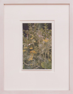 VIJA CELMINS (b. 1939): DILL, GOOSEBERRY, ONION, BORAGE