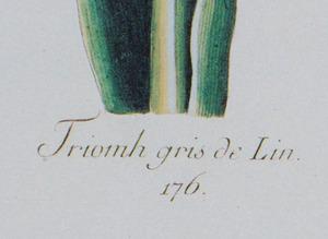 20th Century School: Two Botanical Prints