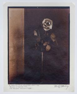ROBERT J. STEINBERG (b. 1948): FLOWERS: THREE PLATES AND A PORTFOLIO