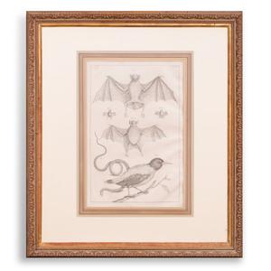 European School: Lizards, Snakes and Bats: Eight Plates