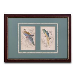 European School: Four Ornithological Book Plates