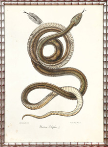 Continental School: Snakes
