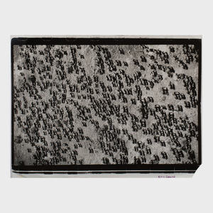 Peter Beard (b. 1938): Mkomazi Elephant Herd, From the End Game