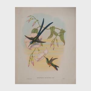 After John Gould (1804-1881): Humming Birds: Six Plates