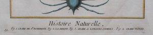 François Nicolas Martinet (1725-1804): Histoire Naturelle, From Diderot & d'Alembert's Encyclopedie: Two Plates