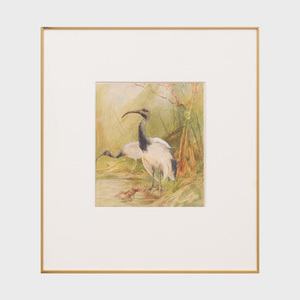 Charles Whymper (1853-1941): The Sacred Ibis