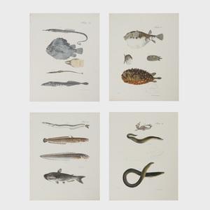 John William Hill (1812-1879): Fish
