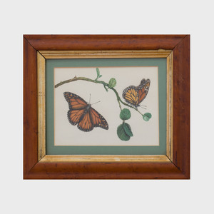 Two English Watercolors of Butterflies and Six Framed Butterfly Specimens
