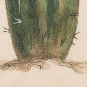 American School: Cactus