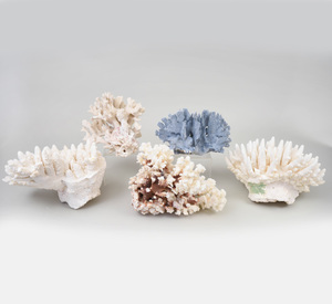 Five Groups of Coral