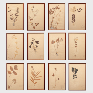 European School: Botanical Specimens