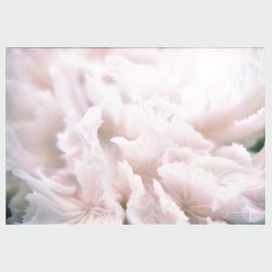 Gordon Parks (1912-2006): Petals