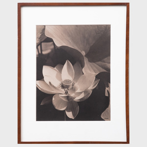 After Edward Steichen (1879-1973): Lotus