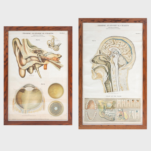 Frohse Anatomical Charts, Chart 5a and Chart No. 7