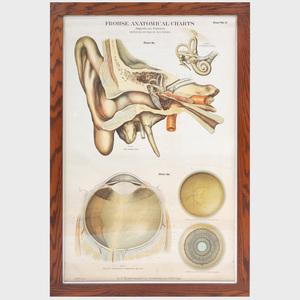 Frohse Anatomical Charts, Chart 5a and Chart No. 7