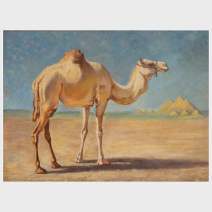 20th Century School: Camel