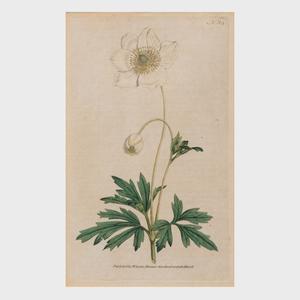 William Curtis (1746-1799): Botanic Garden: Ten Plates