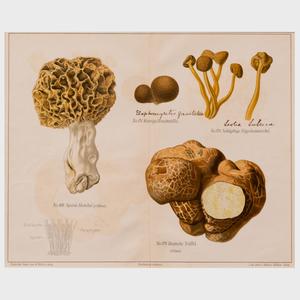 Walter Müller (1847-1927): Mushrooms: Twenty Plates